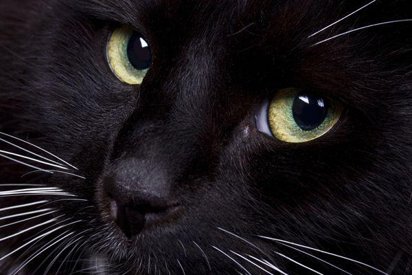 "<a href=""http://www.shutterstock.com/pic-65327149/stock-photo-cat-s-face-closeup.html"" target=""_blank"">Cat face close-up</a> by Shutterstock"