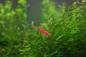 http://aquafish.spb.ru/users/aleksandr/publications/diagnostika-pitaniya-rastenii-po-vneshnemu-vidu