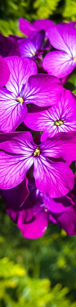 #flowers #nature #Nokia #Lumia 1020: full gallery: http://www.snaphub.pl/galerie/nokia-lumia-1020-najlepszy-fotograficzny-smartfon