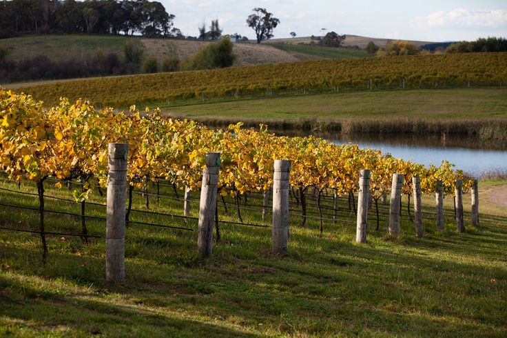 Beautiful Orange to stay and enjoy food & wine in central NSW. #food #wine http://www.ozehols.com.au/blog/new-south-wales/motels-in-dubbo-motels-in-bathurst-to-stay-and-enjoy-food-wine/