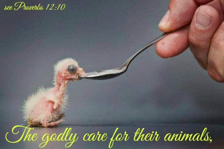 Proverbs 12:10 The godly care for their animals,     but the wicked are always cruel.