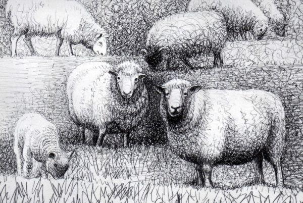 Henry Moore Sheep Drawing 4