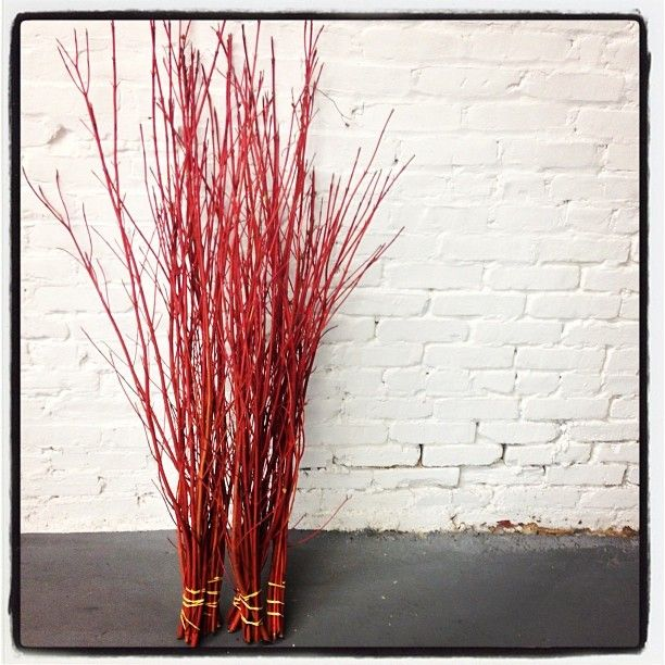 Where and how to harvest red twig dogwood stems for holiday decor - Foraged, from the garden and purchased locally.