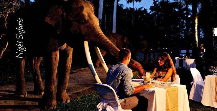 Night safaris tours