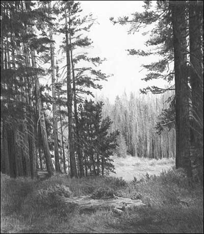 Pencil is definitely my favorite medium -- I dream of being able to capture God's creation so beautifully. LANDSCAPES - Graphite Pencil Drawings by Diane Wright