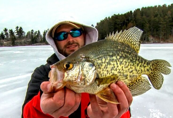 37 best crappie fishing pics images on pinterest crappie for Best bass fishing near me