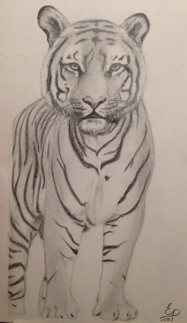 Tiger. Blyerts.