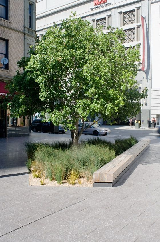 love the whispy grasses, seating, and tree, the linear elements are broken up beautifully by the grasses