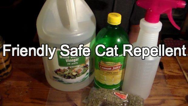 Friendly (but Effective) Cat Repellent - rosemary, lemon juice, vinegar spray