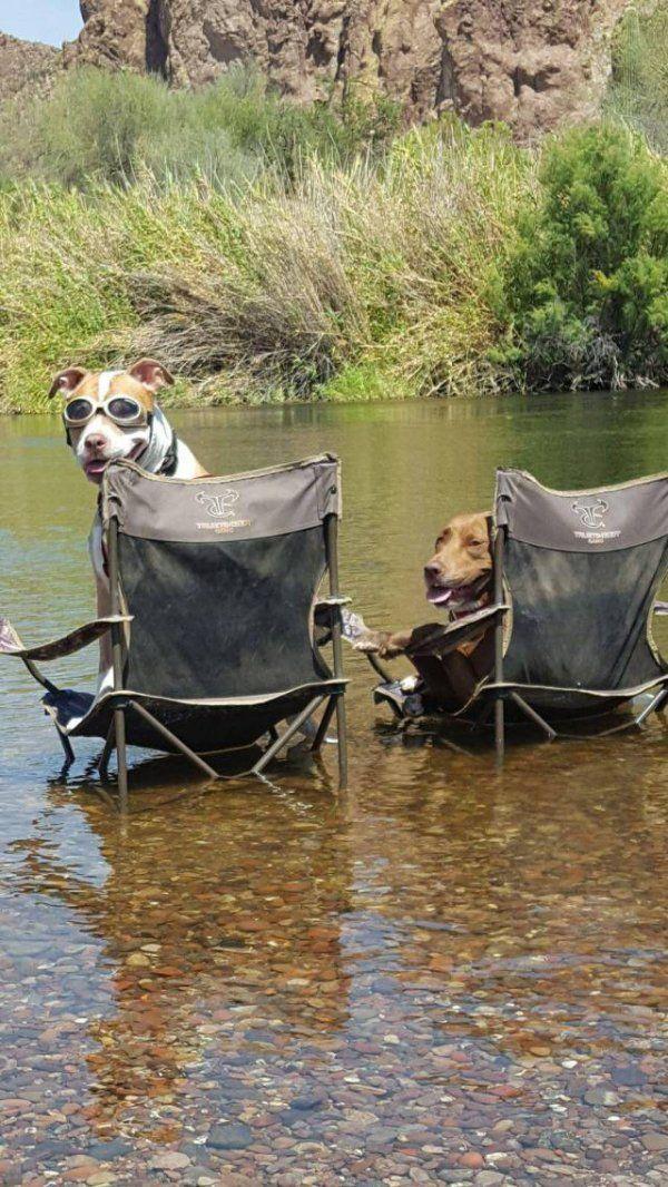 Amazingly Funny Animals – 38 Pics
