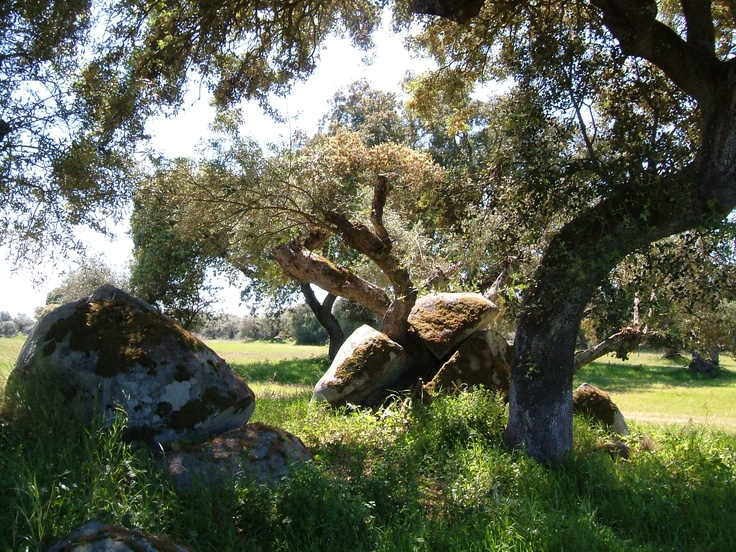 Cork oaks and burial chambers in the Alentejo