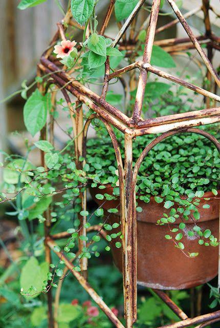 romantic wire vine house plantsflowers