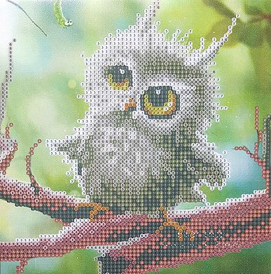 Little Owl - Stretched Canvas