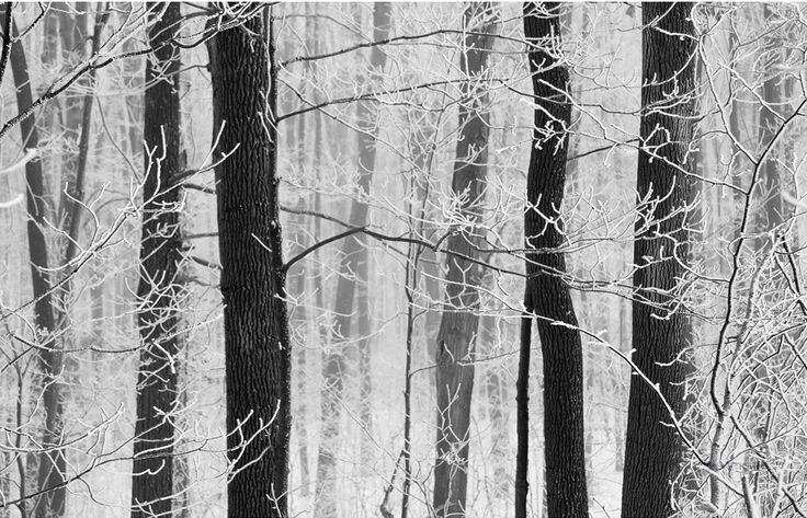 FROST AND TREES BY JOHN BARTOSIK