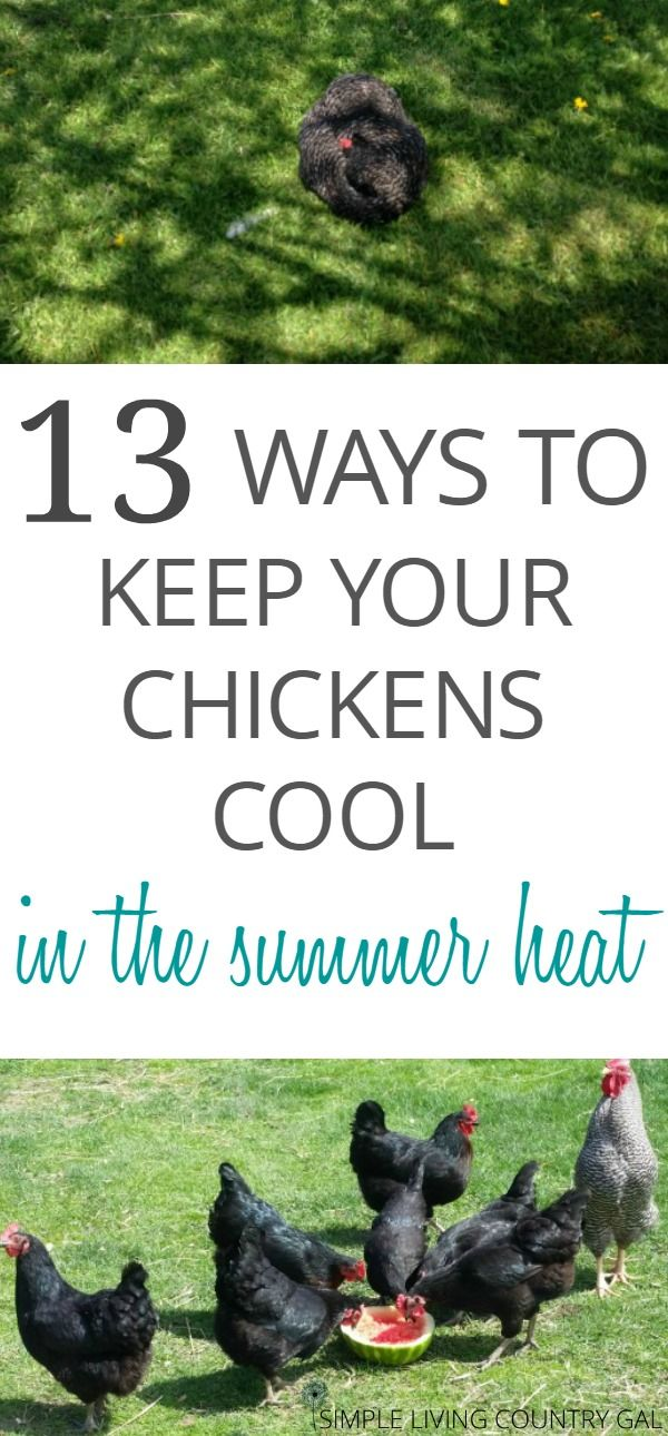 25 best ideas about chicken signs on pinterest chicken coop signs chicken quotes and chicken. Black Bedroom Furniture Sets. Home Design Ideas