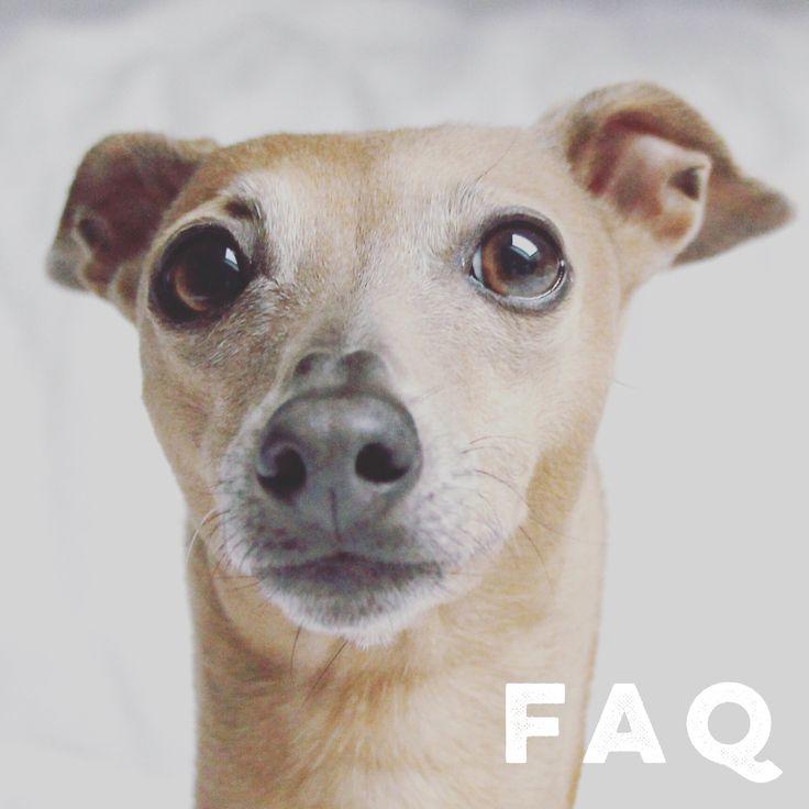 Ein sehr umstrittenes Thema: darf der Hund mit Bett schlafen oder nicht. Wir liefern Dir in diesem Beitrag die Gründe für eine klares JA!