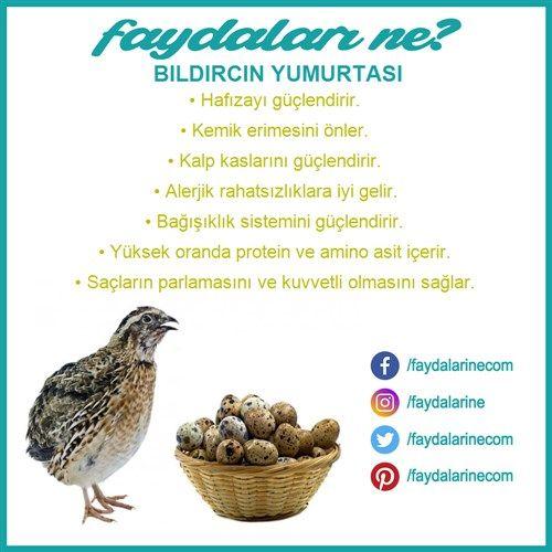 #bıldırcın #yumurta #bıldırcın yumurtası #bıldırcınyumurtasınınfaydaları #faydaalrı #zararları #faydalarıne #faydalarine