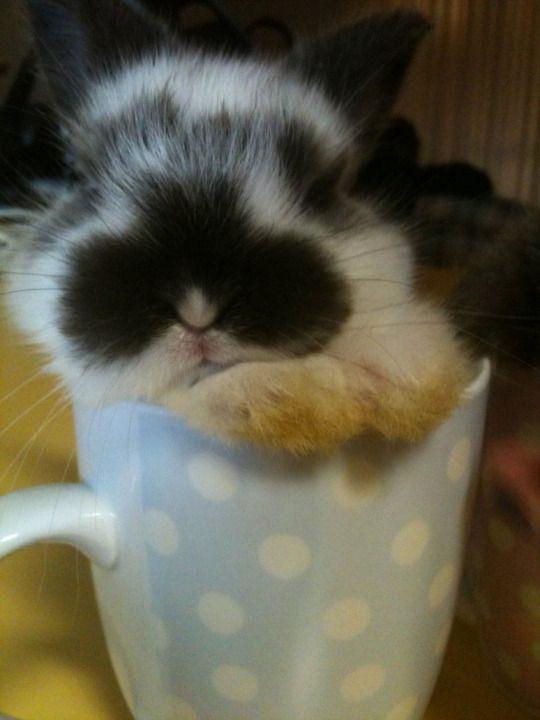 Cute Things in Cups