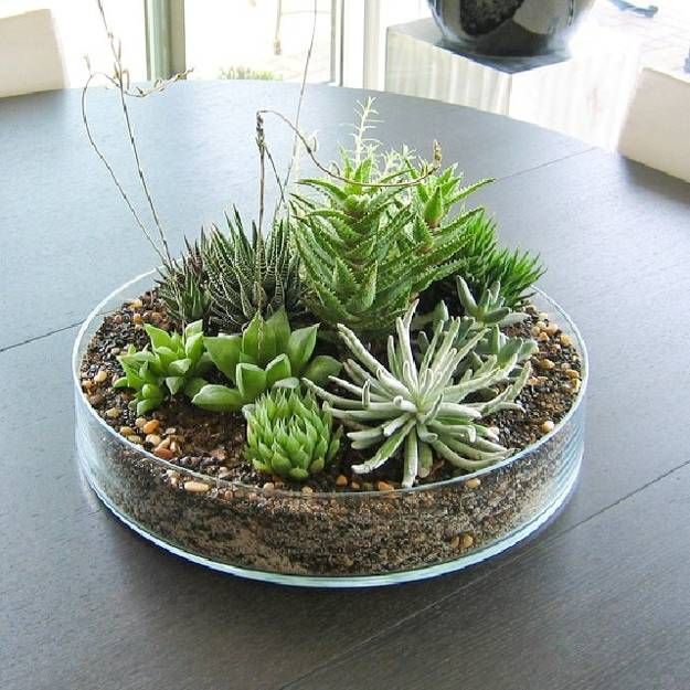 Eco Gifts And Home Decorations With Succulent Plants