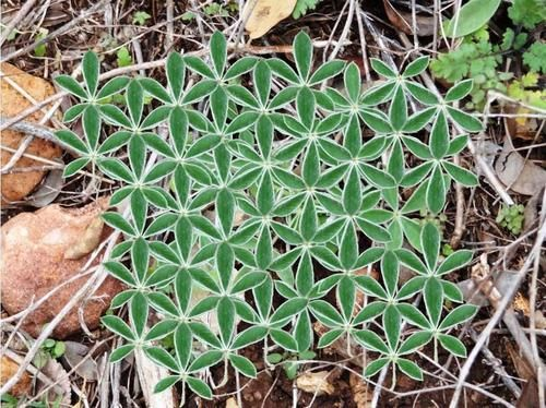 Naturally occurring flower of life pattern.