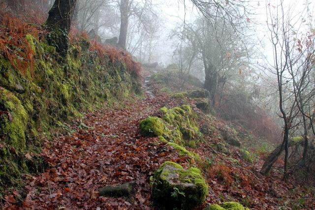 Bosques na Ribeira Sacra- Ourense- Galice- Spain