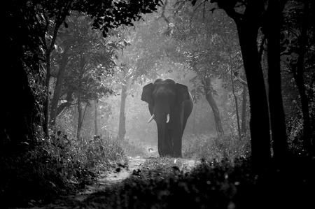 I Have my own path to follow Photo by Aneesh Sankarankutty -- National Geographic Your Shot