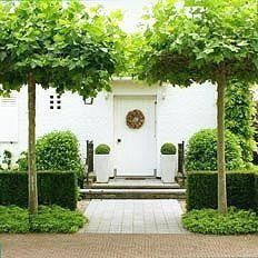 Voortuin met platanen en taxusvakken.   Oplopend richting de voordeur mooie bestrating en buxus in potten.                     André Meilink