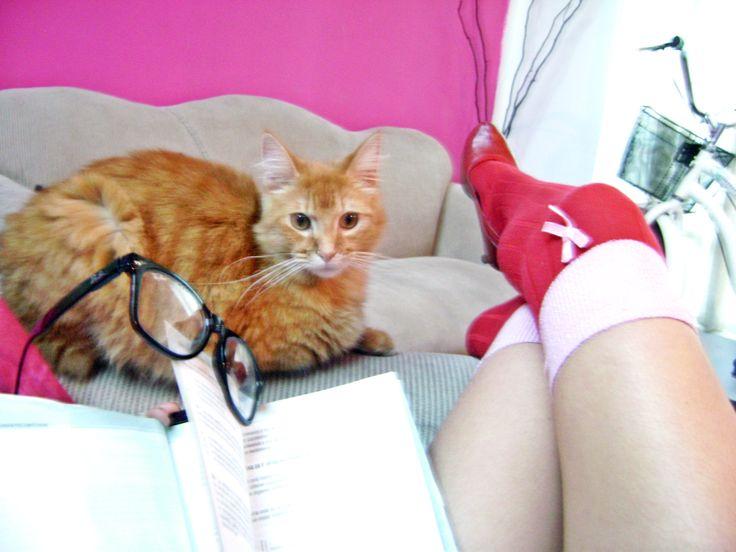 Aioria, mientras estudio.