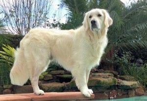 Средние породы собак: список с фото, название, описание породы
