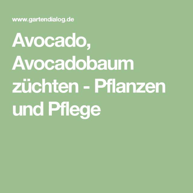 17 Best Ideas About Avocado Pflanze On Pinterest | Avocado Züchten ... Fenchel Pflanzen Tipps Pflege Gemuse