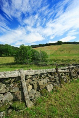 Grazing livestock on a grass meadow of Scotland.  Old stone fence separates the properties.  Stock Photo - 2119973