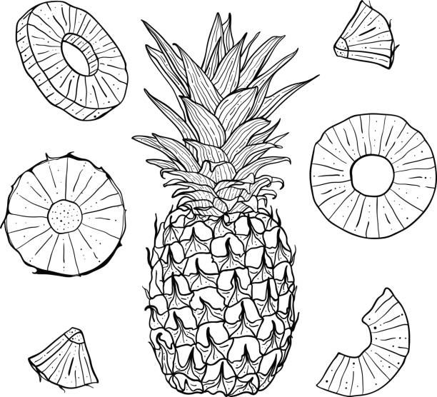 Vector Hand Drawn Pineapple And Sliced Pieces Set Tropical Engraved Illustrazione Frutta Idee Per Disegnare Illustration