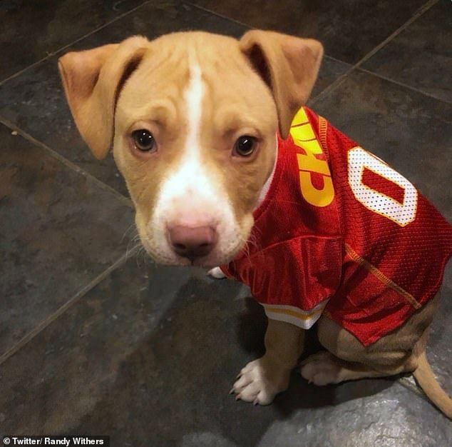 Kansas City Chiefs Player To Pay For All Adoptions At Animal