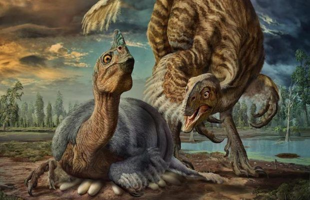 ARKEOFİLİ ///  Dev Yumurtanın İçinde 'Bebek Ejderha' Dinozoru Bulundu