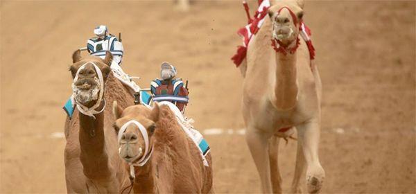 Een op afstand bestuurbare kameel   B R I G H T