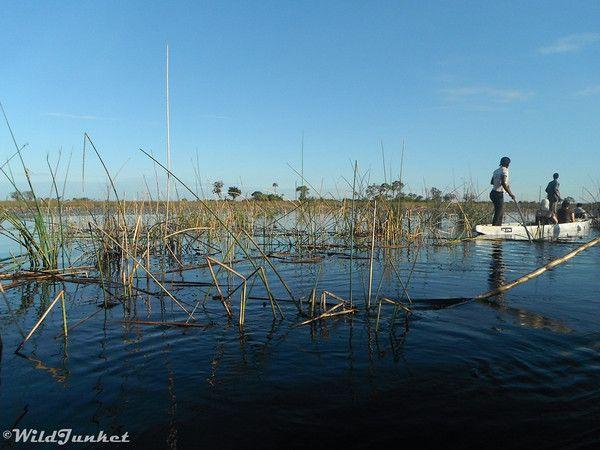 Floating in the Okavango Delta, Botswana