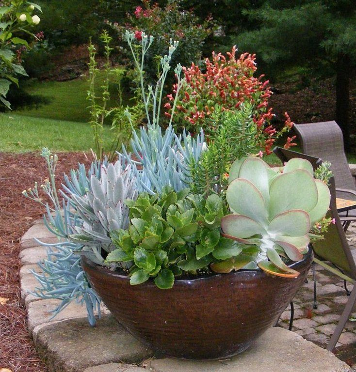 Beautiful low bowl planted with succulents