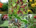 Uncommon-Edible-Trees
