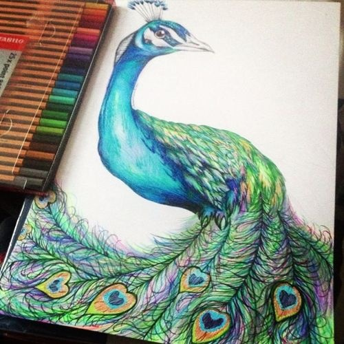 The 25 Best Ideas About Peacock Drawing On Pinterest