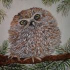 Baby Pygmy Owl Watercolor Painting