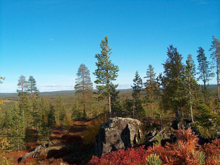 hirvipirtit lapland cabins, Taivalkoski Finland, Autumn colours