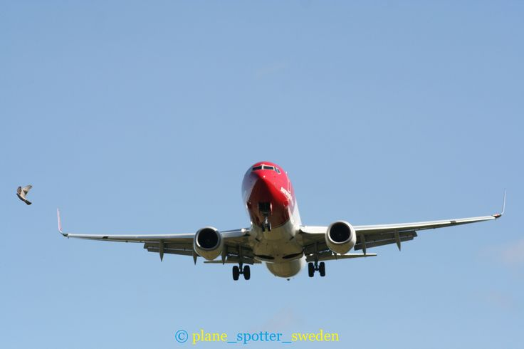 NEAR BIRD STRIKE ON NOWEIGAN 737 AT ARLANDA AIPORT  COPYRIGHT PLANE_SPOTTER_SWEDEN