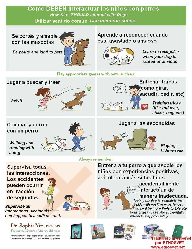 Como se debe interactuar con perros