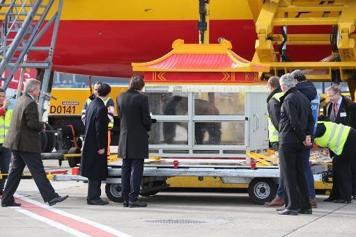 F.G. Saraiva: Belgas recebem dois pandas gigantes chineses