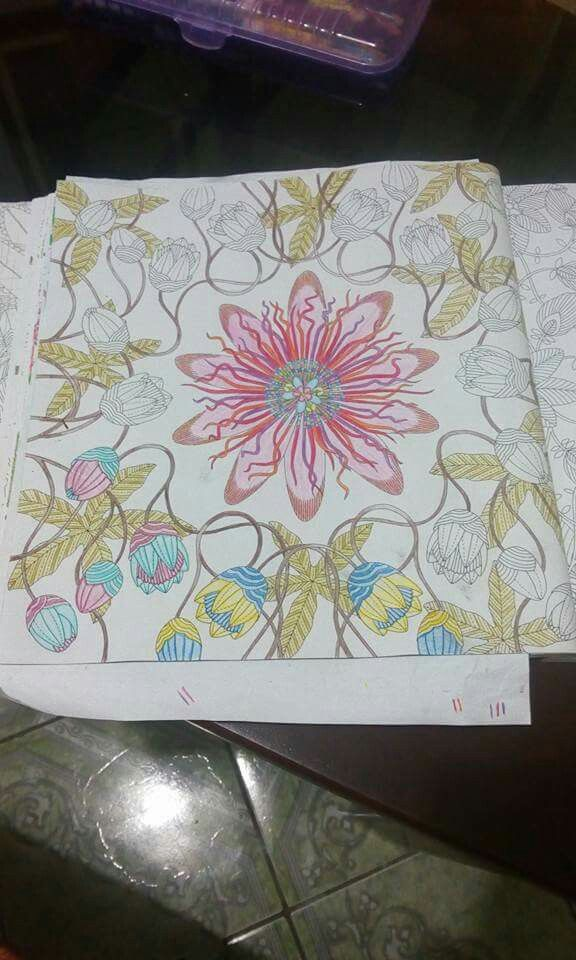 Animal Kingdom Coloring Book Bear The 466 Best Images About Millie Marotta On Pinterest Herons