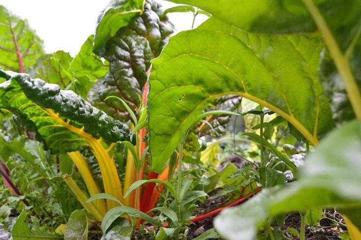 Fem grönsaker att fylla ut med