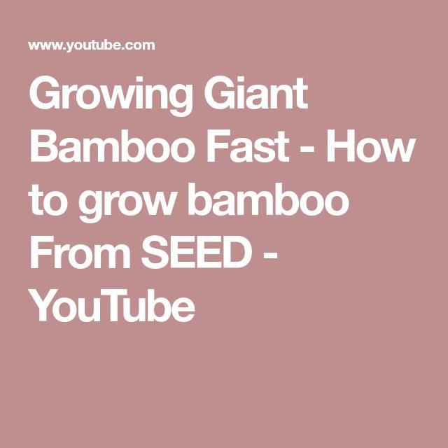 Die besten 25+ Giant bamboo Ideen auf Pinterest Bambus - bambus mobel produkte nachhaltigkeit
