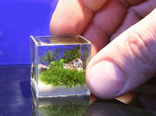 miniature-nano1.jpg (500×373)