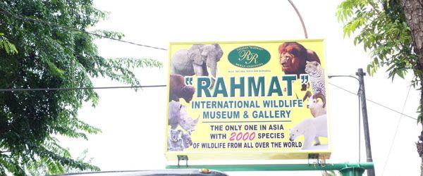 Melihat 2000 Spesies Satwa Di Museum Rahmat