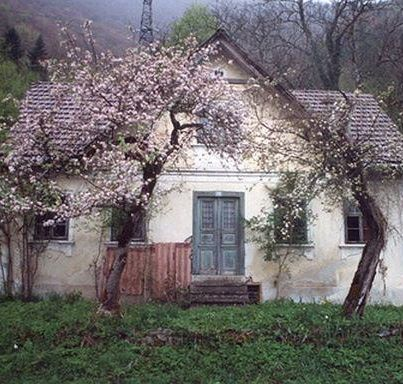 A rather tired house exterior is incredibly saved by those amazing pretty trees and that gorgeous front door!